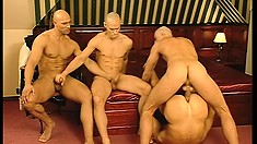 Gay baldheads with chiseled bodies in a wild foursome fucking video