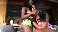 Juicy black dykes go down on each other after they get naked