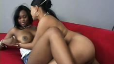 Ebony college babes love to scissor their slits in hot lesbian scene